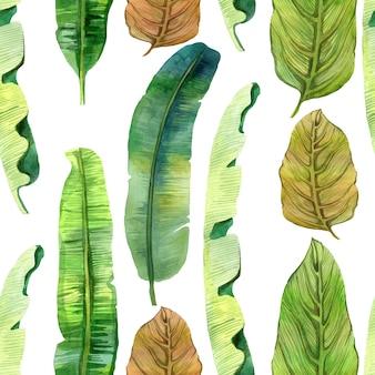 Exotic tropic green leaves. banana leaves. seamlees leaves pattern on white.
