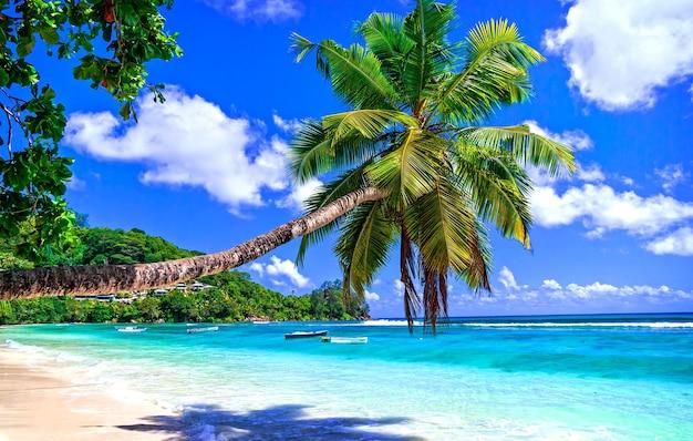 夢からのエキゾチックな熱帯のビーチの風景