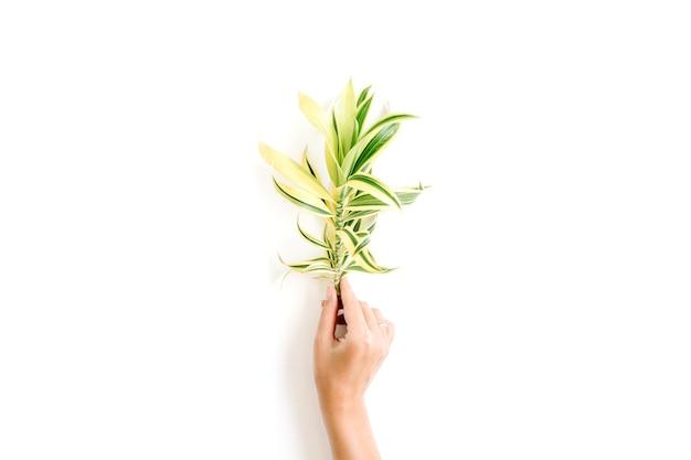 흰색 바탕에 여자의 손에 이국적인 열 대 꽃다발. 평면 위치, 평면도 개념