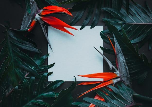 Экзотические тропические цветы и чистый белый лист