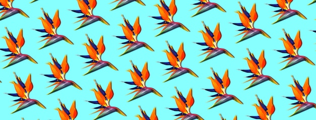 Exotic tropical flowers bird of paradise (strelitzia), panoramic pattern on blue background