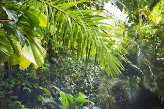 Exotic tropical foliage in rain forest