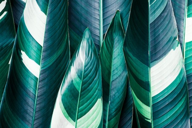 Exotic tropical leaves close-up