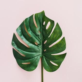 エキゾチックな熱帯モンステラヤシの葉フラットレイ