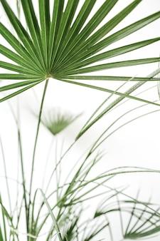 白い背景にエキゾチックな熱帯のヤシの枝