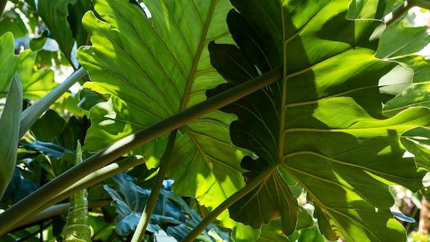 エキゾチックな植生と植物