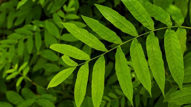 エキゾチックな新緑と植物