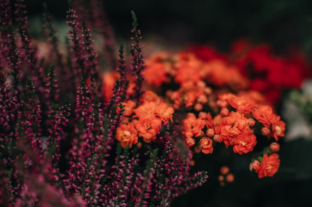 Exotic violet orange flowers growing in the garden image for agriculture perfume cosmetics spa