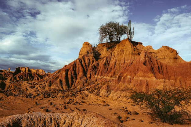 Exotic wild plant growing on the rocks in the tatacoa desert, colombia under the blue sky