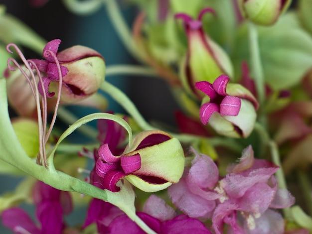 배경 흐리게에 4 개의 꽃잎을 가진 자주색 새싹을 확장. 야생화의 꽃다발