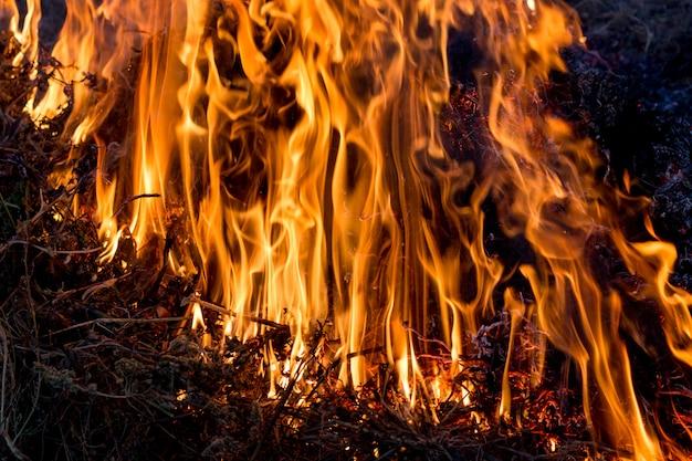 広大な火。火のテクスチャ、暗い背景に明るい炎
