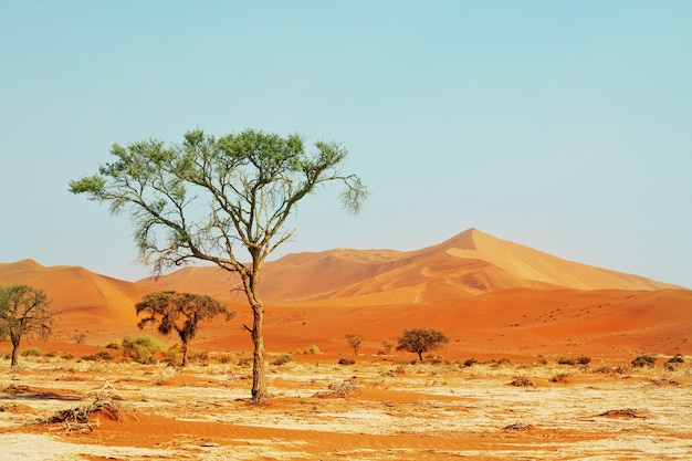 Expedition  in namib desert