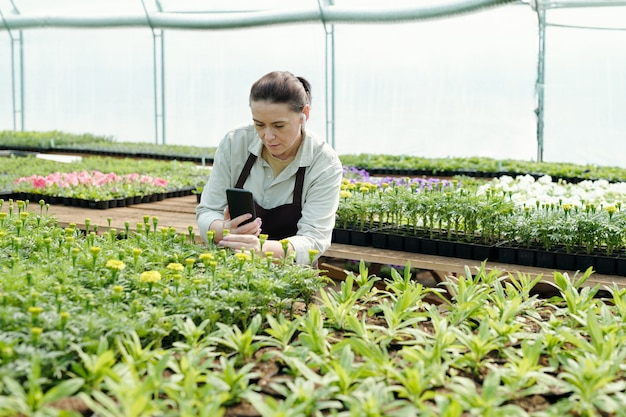 스마트폰으로 꽃 묘목을 촬영하는 숙련된 농부
