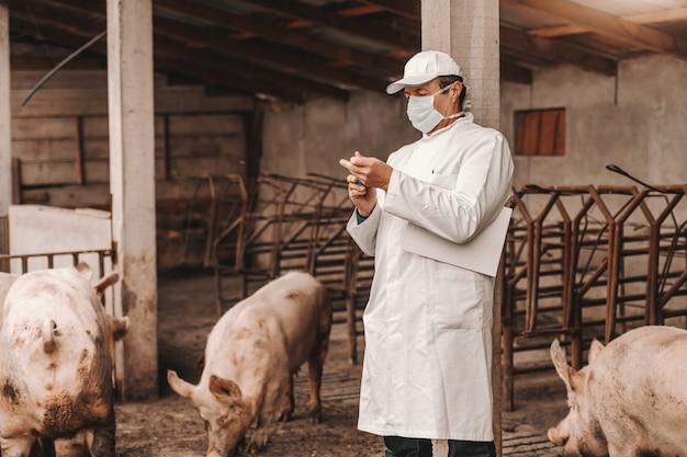 Опытный старший ветеринар в белой форме, шляпе и маске на лице, держа доску под мышкой и закрывая шприц, стоя в коте в окружении свиней.