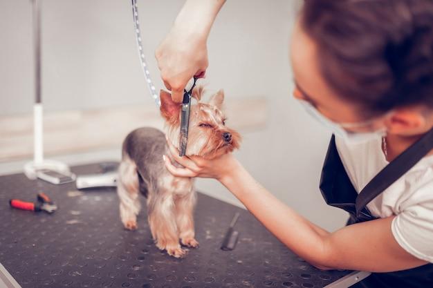 経験豊富な労働者。テーブルの上に立っているかわいい犬の毛を切るグルーミングサロンの経験豊富な労働者