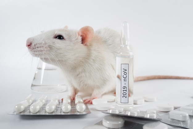 Experiment with lab rat, mouse to find coronavirus vaccine in lab. coronavirus test tubes.
