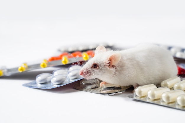 Экспериментальная мышь и таблетки на белом фоне