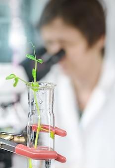 실험실 외투에있는 microscopist를 가진 유리관에있는 실험적인 식물