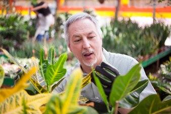 温室内の植物を調べる専門家の庭師