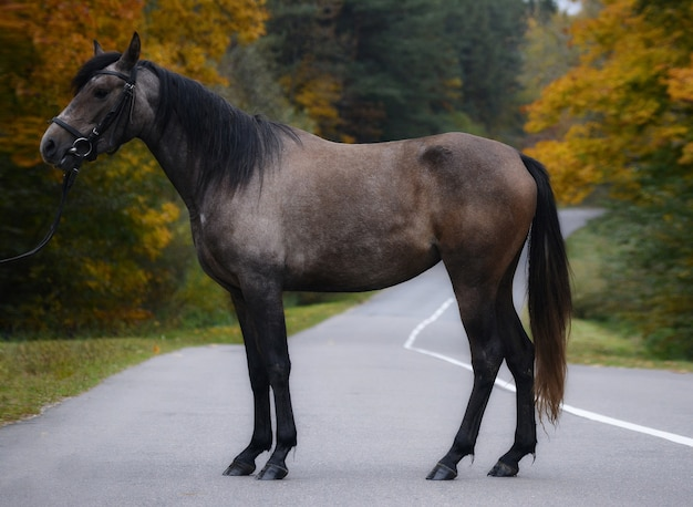 秋の背景に馬の外観写真