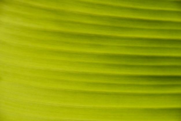 Экстремальный крупным планом фоновой текстуры ярко-зеленого пальмового листа с прожилками