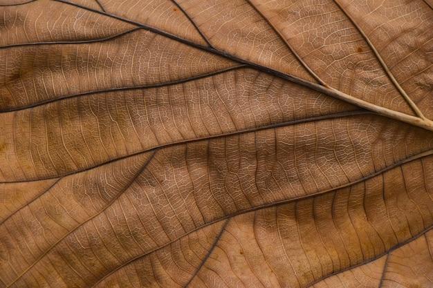 극단적 인 정맥 패턴으로 말린 갈색 타락한 가을 잎의 배경 질감을 닫습니다