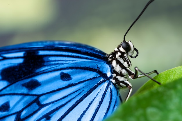 Extreme close up bright blue butterfly