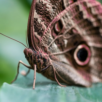 Extreme close up brown butterfly