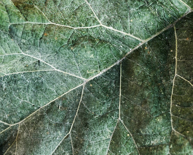 Extreme close-up green leaf texture
