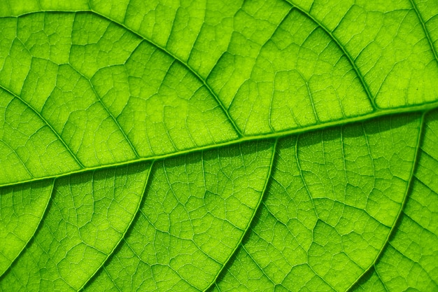 Extreme close-up of a leaf of a young avocado tree with visible structure