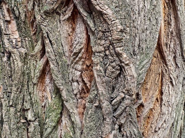 野生の木の穀物の樹皮の極端なクローズアップ