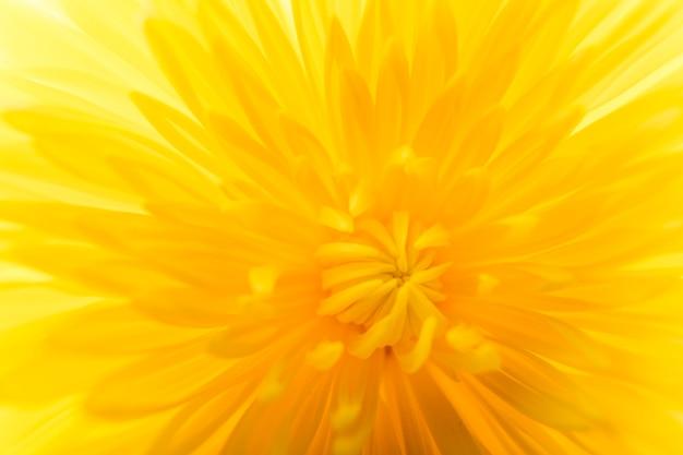 노란 꽃의 극단적 인 클로즈업