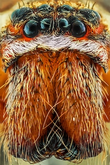 Extreme close up of spider