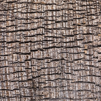 Extreme close-up wooden texture