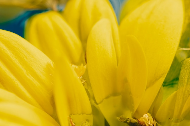 Extreme close-up on yellow petals