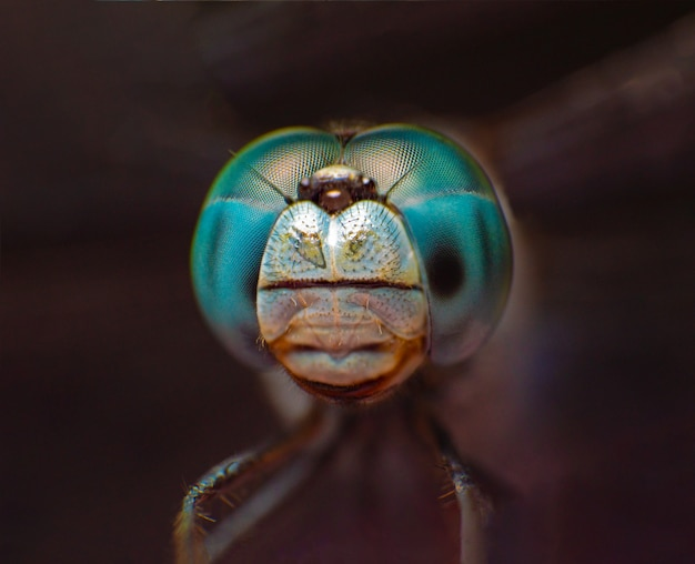 Extreme macro shot eye of blue dragonfly in wild.