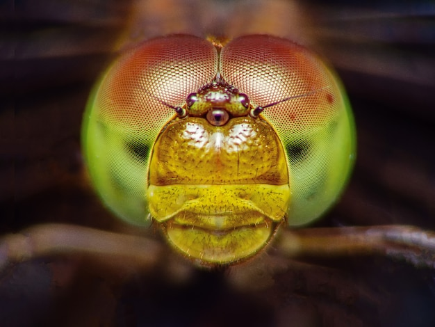Extreme macro shot eye of dragonfly in the wild.