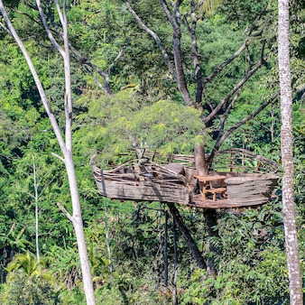 Extreme recreation area on a high tropical tree in the jungle near the rice terraces in island bali, indonesia . nature and travel concept