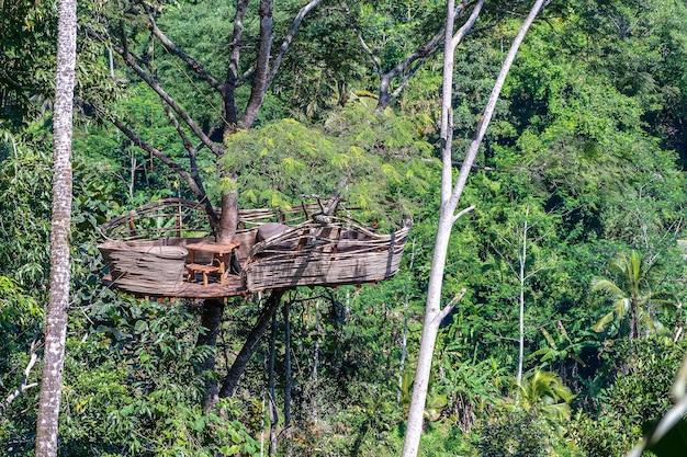 インドネシア、バリ島の棚田近くのジャングルにある高い熱帯の木の極端なレクリエーションエリア。自然と旅行のコンセプト