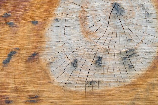 Ð • выступ пня, участок ствола с годичными кольцами. запасное фото.