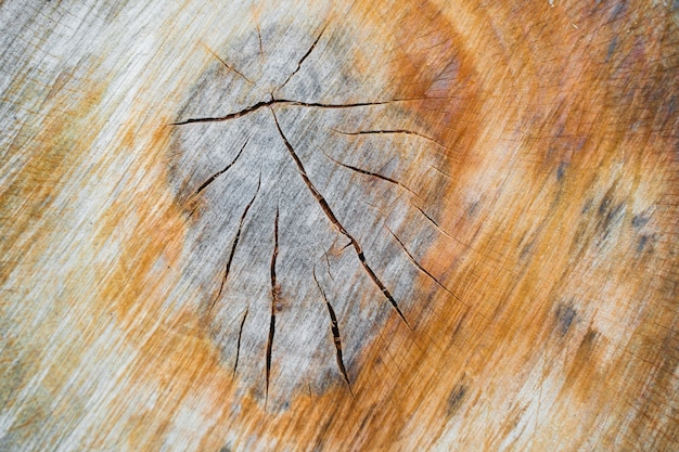 Еexture of tree stump, section of the trunk with annual rings. stock photo.