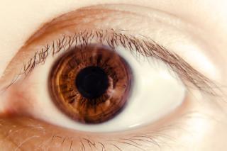 Eye , eyelid