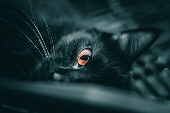 Eye of a cat.