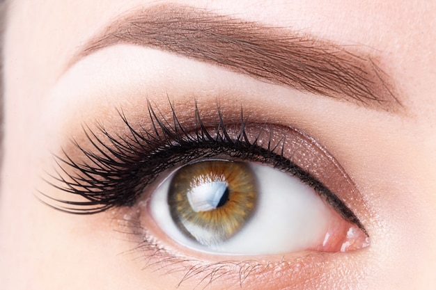 Eye with long eyelashes and light brown eyebrow close-up. eyelashes lamination, microblading