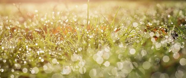 緑の草と雨のぼやけた生態はf水を落とします。バナー