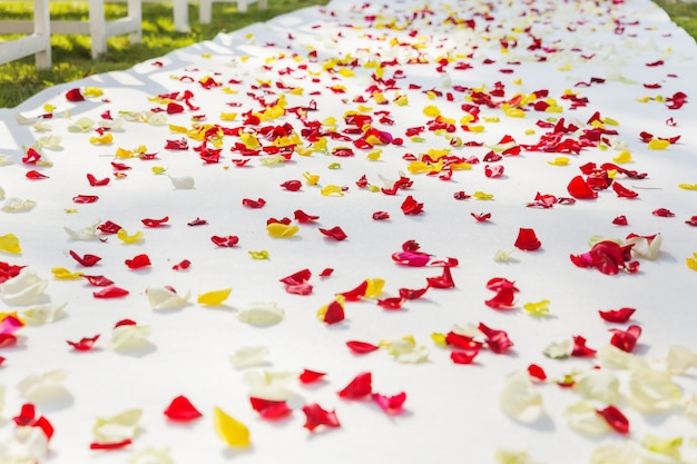 Fabric path to floral arch for wedding ceremony, decorated with rose petals.
