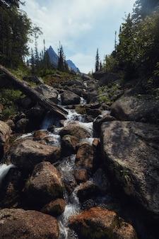 멋진 계류, 무성한 녹지 및 주변의 꽃. 산에서 해동 된 샘물. 높은 산, 고산 초원의 환상적인 전망