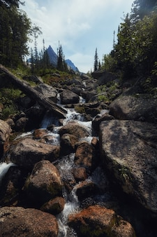 Fabulous mountain streams, lush greenery and flowers around. thawed spring water from the mountains. magical views of high mountains, alpine meadows