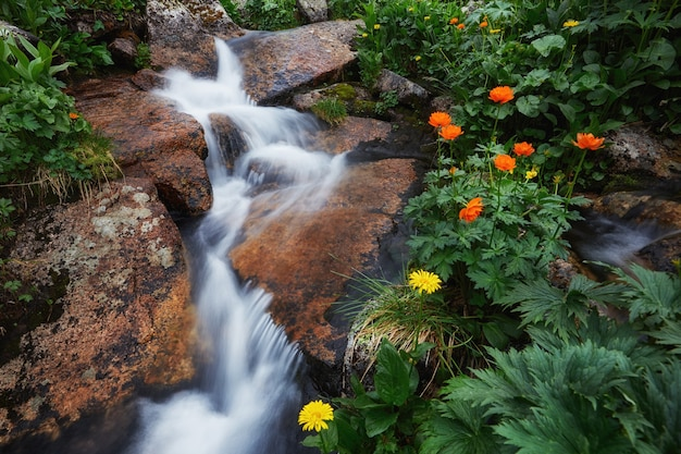 Fabulous mountain streams, lush greenery and flowers around. thawed spring water from mountains. magical views of high mountains