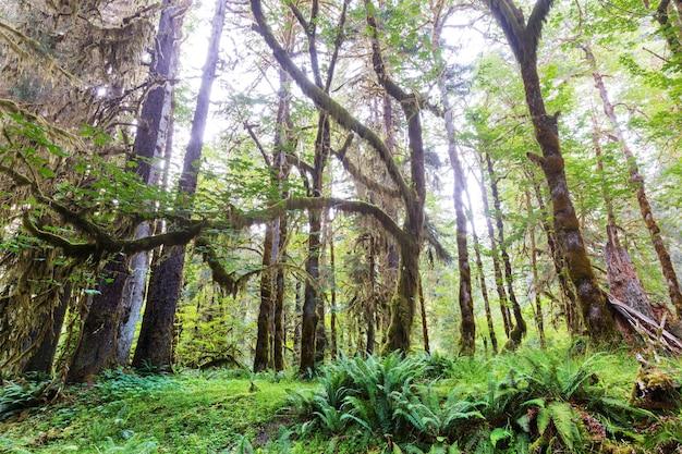 올림픽 국립 공원, 워싱턴, 미국에서 멋진 열대 우림.